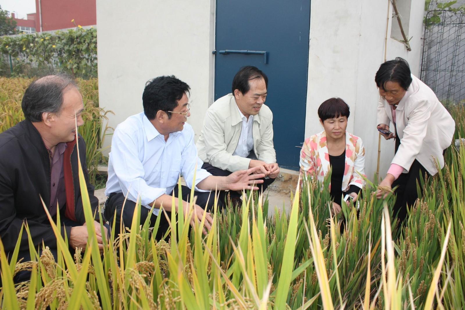 河南省农业厅种植业管理处处长汤其林、新乡市农业局领导在公司调研