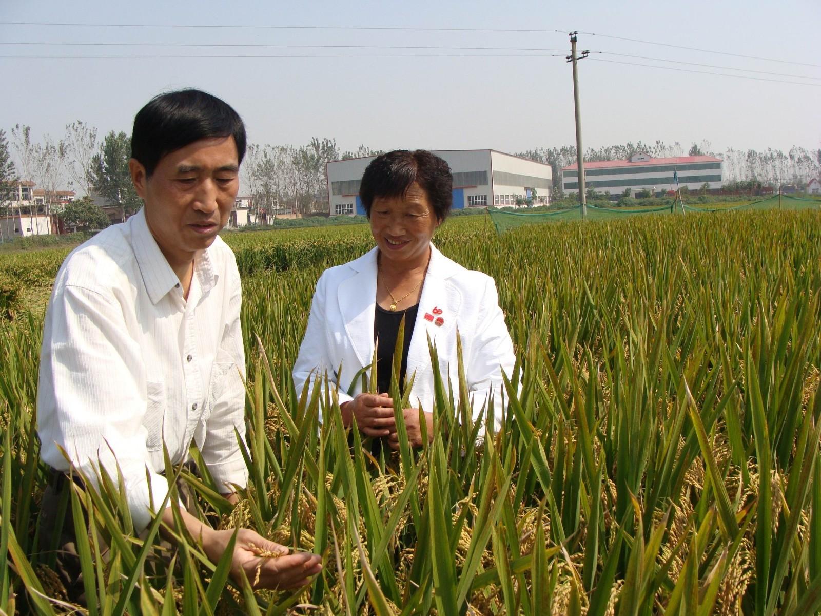 河南省农技推广总站站长任洪志在公司调研
