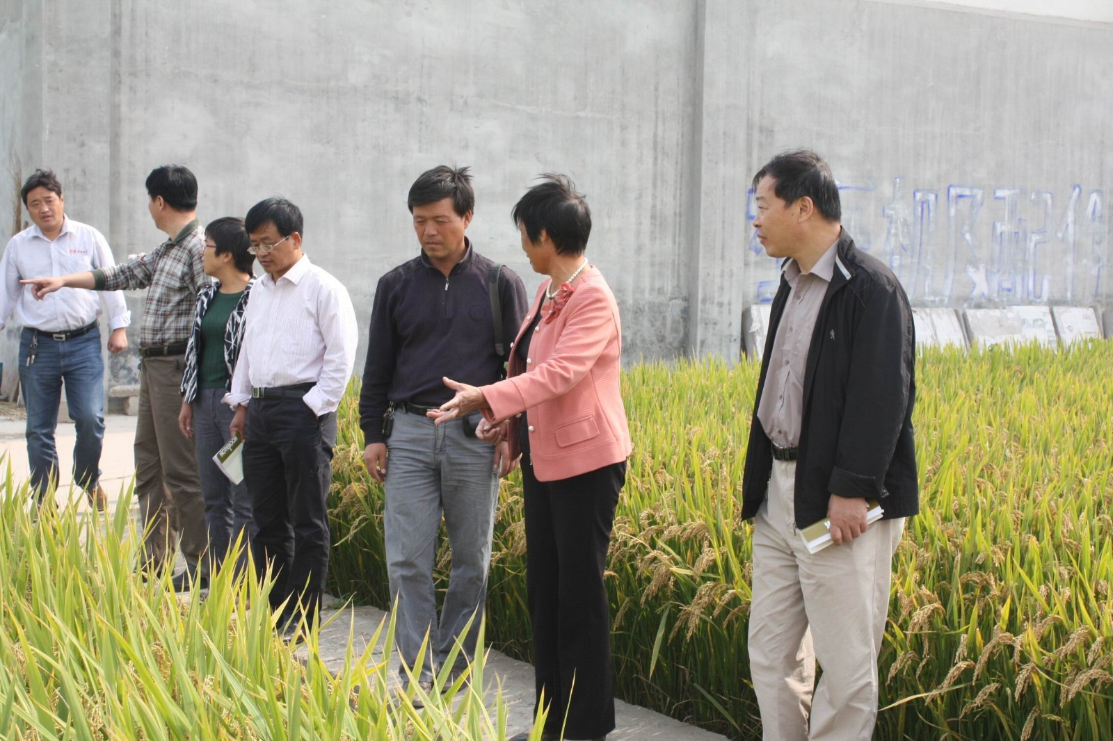 省种子管理站、河南省农科院专家到公司指导工作