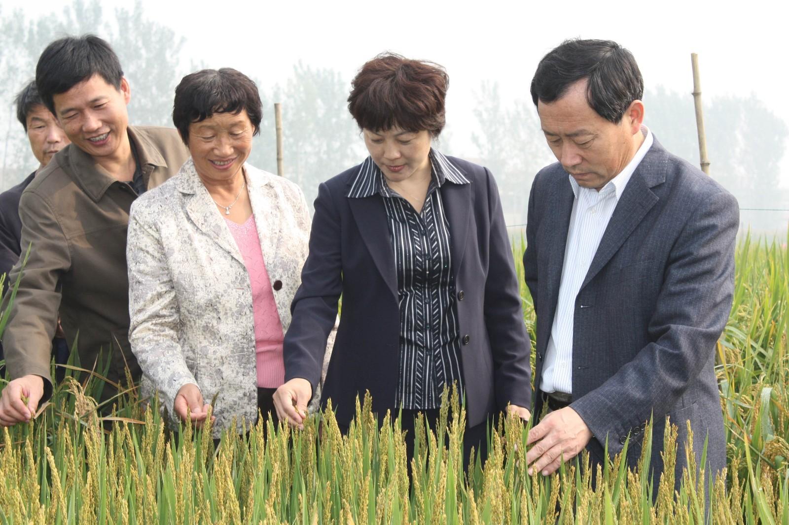 新乡市农业局局长聂聚、新乡县副县长张怡春、新乡县农业局等领导在公司试验田视察